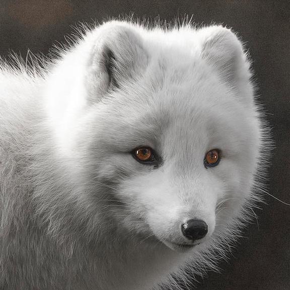 IceFox's avatar
